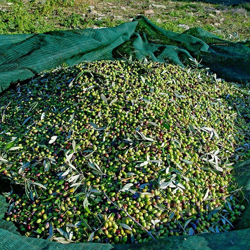 greekponyfarm-olives