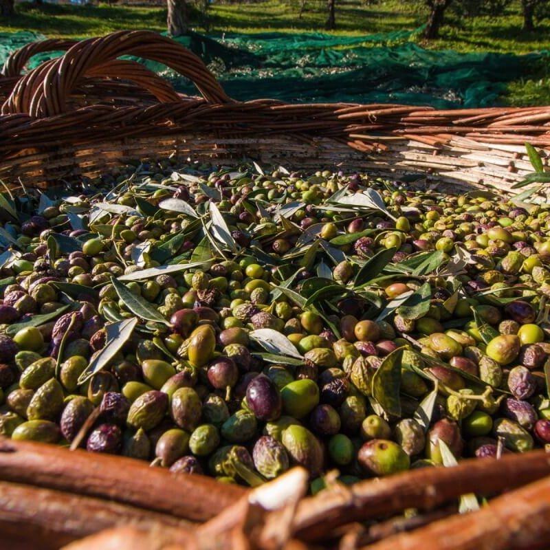 harvest-baskets-full